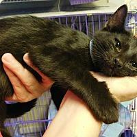 Adopt A Pet :: Binky - Winston-Salem, NC