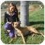Photo 2 - Rhodesian Ridgeback/Boxer Mix Dog for adoption in El Cajon, California - Lucy