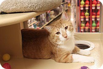 Domestic Shorthair Cat for adoption in Smyrna, Georgia - Jasper & Eva