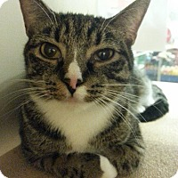 Adopt A Pet :: Olive - West Dundee, IL