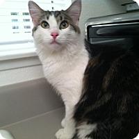 Adopt A Pet :: Mandy - Laguna Woods, CA