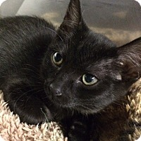 Adopt A Pet :: Loretta Lynn - Byron Center, MI