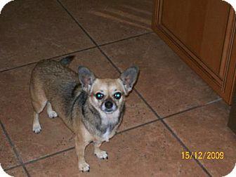 Chihuahua/Pug Mix Dog for adoption in DeLand, Florida - Alana