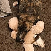 Adopt A Pet :: Fabio - Phoenix, AZ