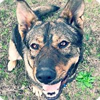 Shepherd (Unknown Type) Mix Dog for adoption in Prior Lake, Minnesota - Zeus