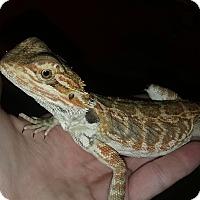 Adopt A Pet :: Charlie - Souderton, PA