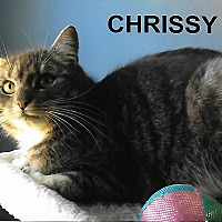 Adopt A Pet :: Chrissy - Medway, MA