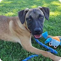 Adopt A Pet :: Noah - Las Cruces, NM