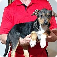 Adopt A Pet :: Zeus - Gahanna, OH