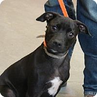 Adopt A Pet :: Jersey - Aurora, IL