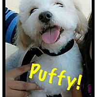Adopt A Pet :: Puffy - Thousand Oaks, CA