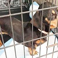 Adopt A Pet :: Sally - Newport, KY