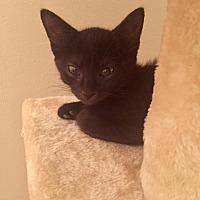 Adopt A Pet :: Quiet - Virginia Beach, VA