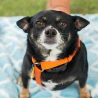 Adopt A Pet :: RJ - Santa Fe, TX