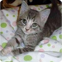 Adopt A Pet :: CrackerJack - Richmond, VA
