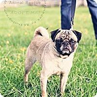 Adopt A Pet :: Nala - Bartow, FL