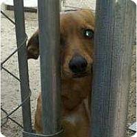 Adopt A Pet :: Dexie - Niceville, FL