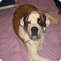 Adopt A Pet :: JASMINE - ADOPTION PENDING - Sudbury, MA