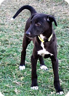 Hound (Unknown Type) Puppy for adoption in Monroe, New Jersey - Titili