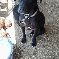 Adopt A Pet :: Mack - Wytheville, VA