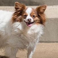Adopt A Pet :: Pudgy - Alexandria, KY