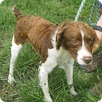 Adopt A Pet :: TN/Jasper - Mount Dora, FL