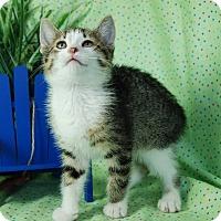 Adopt A Pet :: Theo - Muskegon, MI