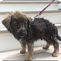 Adopt A Pet :: CISCO - Hampton, VA