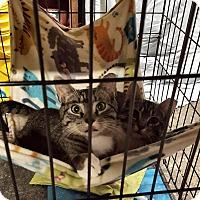 Adopt A Pet :: Emmi - Virginia Beach, VA