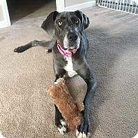 Adopt A Pet :: Gemma - Gallatin, TN