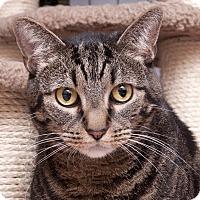Adopt A Pet :: Agatha - Chicago, IL