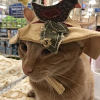 Adopt A Pet :: Howard - Knoxville, TN