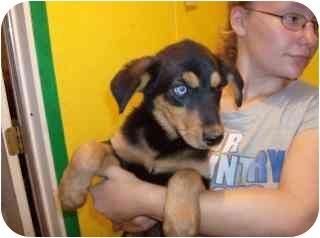 Spaniel (Unknown Type)/Shepherd (Unknown Type) Mix Dog for adoption in Edon, Ohio - Regis..ADOPTED