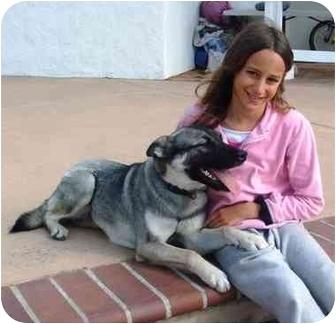 German Shepherd Dog/Norwegian Elkhound Mix Dog for adoption in El Cajon, California - Suka