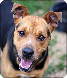 Shepherd (Unknown Type) Mix Dog for adoption in Fort Worth, Texas - Flash URGENT