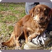 Adopt A Pet :: Emma Lou - Brattleboro, VT