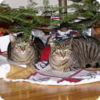 Adopt A Pet :: Mica and Milo - Portland, ME