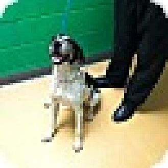 Hound (Unknown Type) Mix Dog for adoption in Providence, Rhode Island - Josephine-URGENT