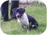 Beagle/Dachshund Mix Dog for adoption in Plaquemine, Louisiana - Dru