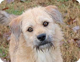Terrier (Unknown Type, Medium)/Terrier (Unknown Type, Small) Mix Dog for adoption in Hagerstown, Maryland - Tyler