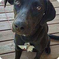 Adopt A Pet :: Charlie - Derry, NH