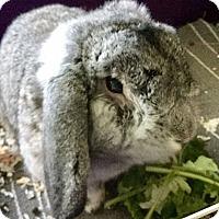 Adopt A Pet :: Louie - Moneta, VA