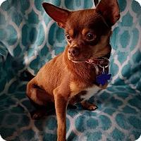 Adopt A Pet :: Rafiki - San Antonio, TX