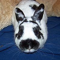 Adopt A Pet :: Sofia - Alexandria, VA