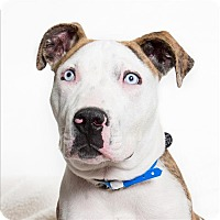 Adopt A Pet :: Junior - San Luis Obispo, CA
