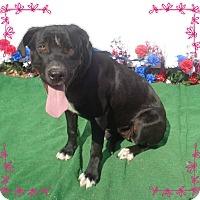Adopt A Pet :: GIDGET - Marietta, GA