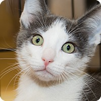 Adopt A Pet :: Mack - Irvine, CA