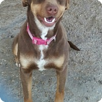 Adopt A Pet :: Cocoa - springtown, TX