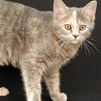 Adopt A Pet :: Grumpy - Newland, NC