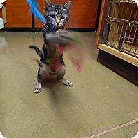 Adopt A Pet :: Kaiah - Manhattan, KS